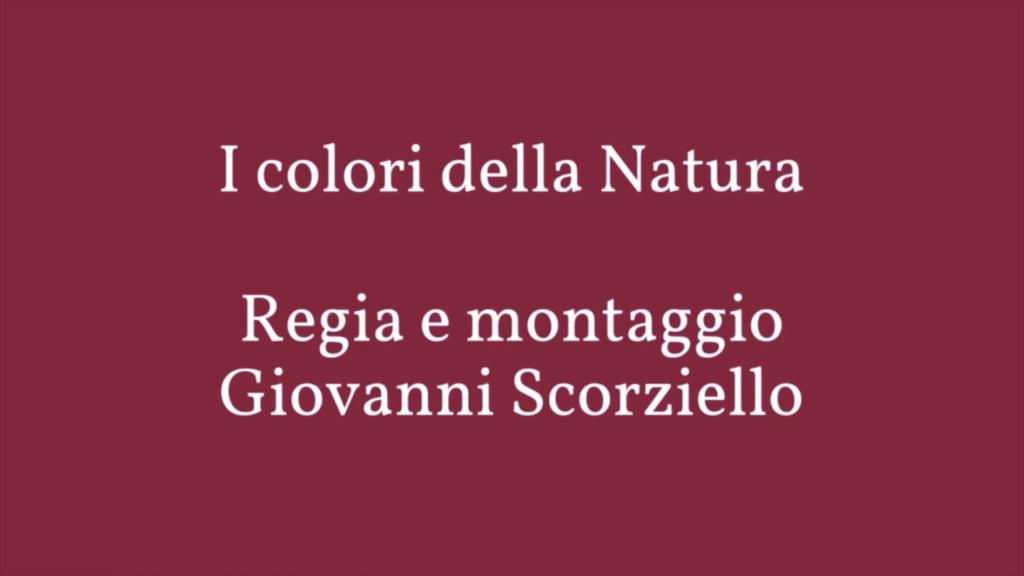 I colori della natura di Giovanni Scorziello
